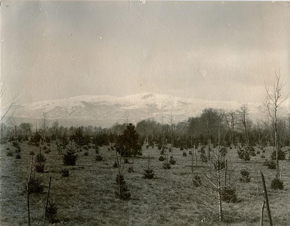 Голото поле на бъдещия дворцов парк, 1898 г.